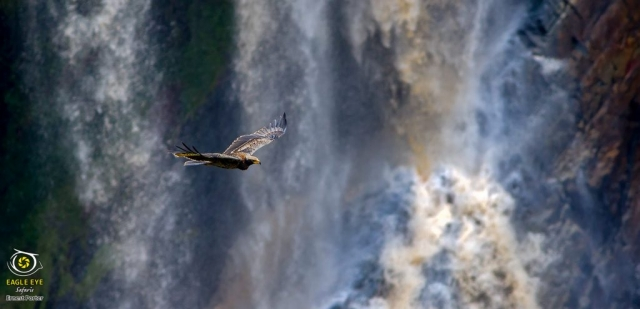 Nessi and the waterfall (Verreaux's Eagle)