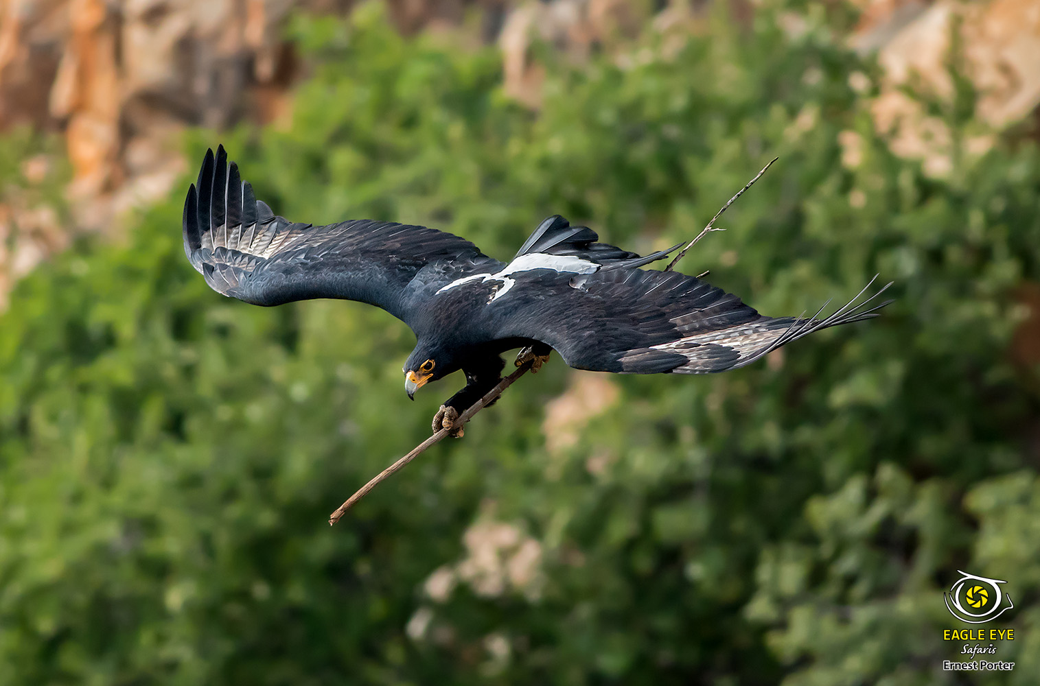 Emoyeni playing quidditch - Harry Potter (Verreaux's Eagle)